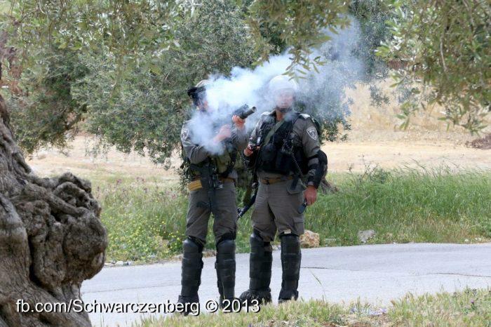 iof firing teagas - haim schw