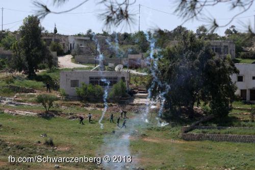 teargas - haim schw